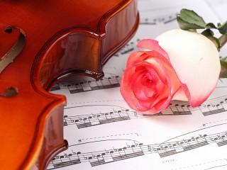 Собирать пазл Инструмент и цветок онлайн