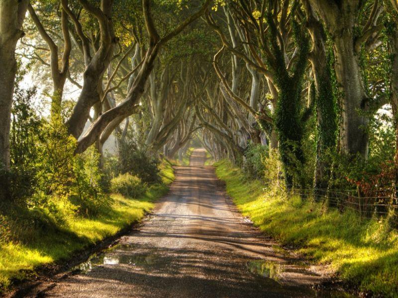 Пазл Собирать пазлы онлайн - Ирландский парк