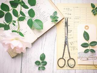 Собирать пазл Исследуем розу онлайн
