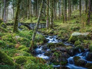 Собирать пазл Каменный мост в лесу онлайн