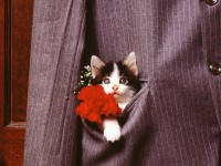 Собирать пазл Карманный котенок онлайн
