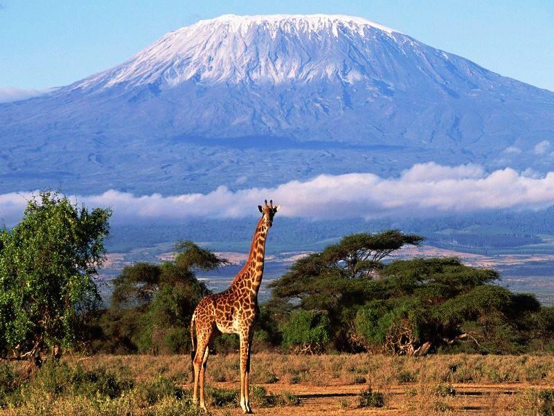 Пазл Собирать пазлы онлайн - Килиманджаро