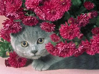 Собирать пазл Киса в цветах онлайн