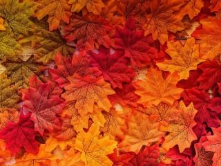 Собирать пазл Кленовые листья онлайн