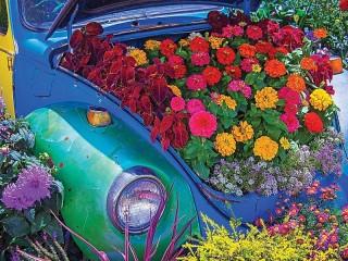 Собирать пазл Клумба в багажнике онлайн