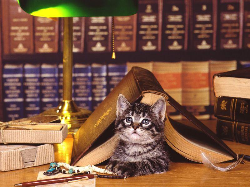 Пазл Собирать пазлы онлайн - Книги и котенок