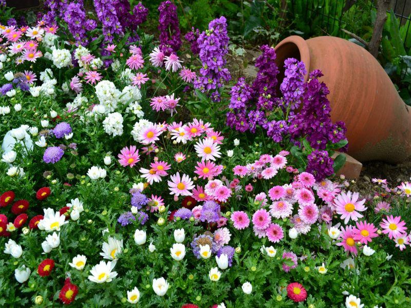 Пазл Собирать пазлы онлайн - Композиция цветов