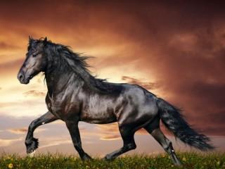Собирать пазл Конь онлайн