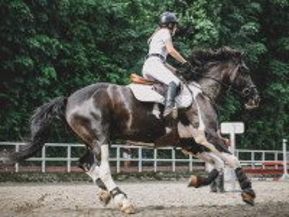 Собирать пазл Конный спорт онлайн