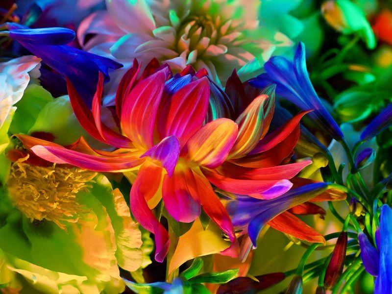 Пазл Собирать пазлы онлайн - Контрасты цветов