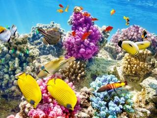 Собирать пазл Коралловый Риф онлайн