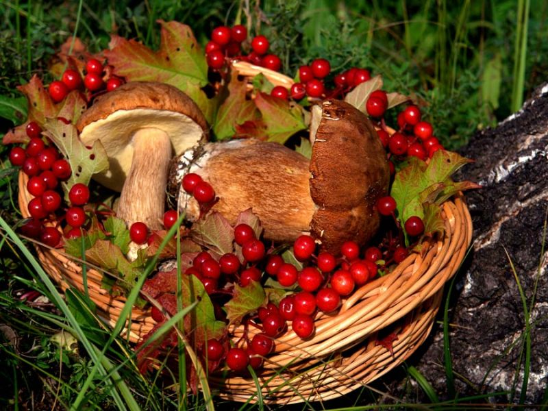 Пазл Собирать пазлы онлайн - Корзина с грибами