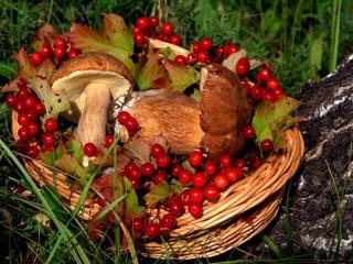 Собирать пазл Корзина с грибами онлайн