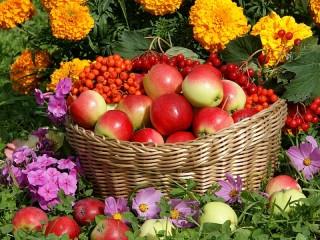Собирать пазл Корзина с яблоками онлайн
