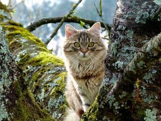 Собирать пазл Кошка в лесу онлайн