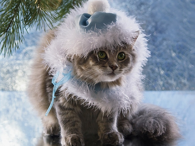 Пазл Собирать пазлы онлайн - Кошка Снегурочка