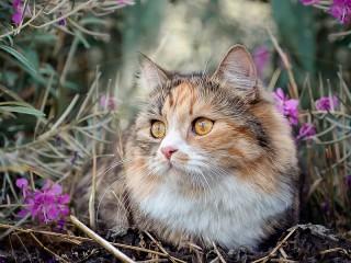 Собирать пазл Кошка в цветах онлайн