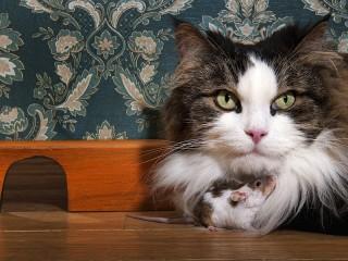 Собирать пазл Кошки-мышки онлайн
