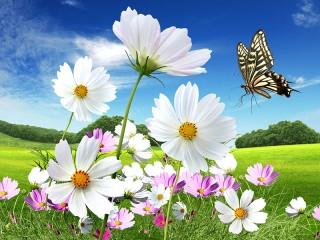 Собирать пазл Космеи и бабочка онлайн