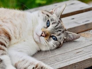 Собирать пазл Кот онлайн