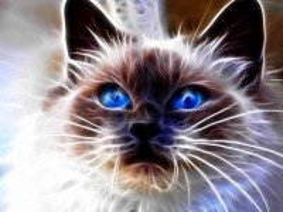 Собирать пазл Кот голубоглазый онлайн