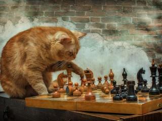Собирать пазл Кот-гроссмейстер онлайн