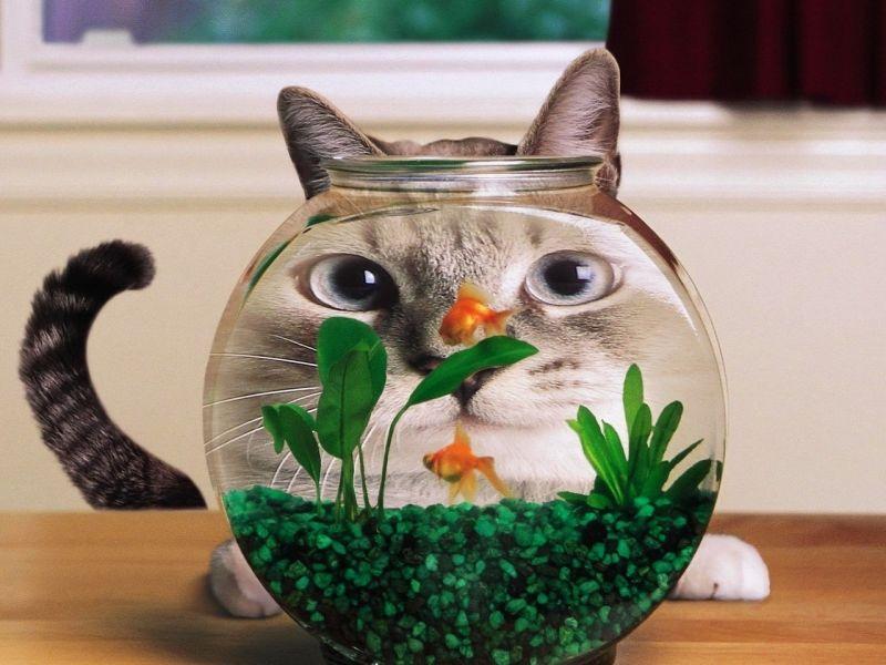 Пазл Собирать пазлы онлайн - Кот и аквариум