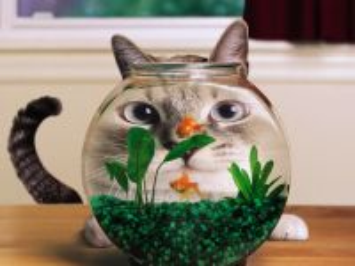 Собирать пазл Кот и аквариум онлайн