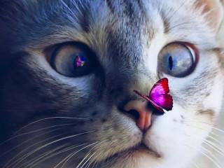 Собирать пазл Кот и бабочка онлайн