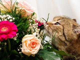 Собирать пазл Кот и букет онлайн