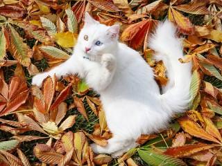 Собирать пазл Кот и листья онлайн