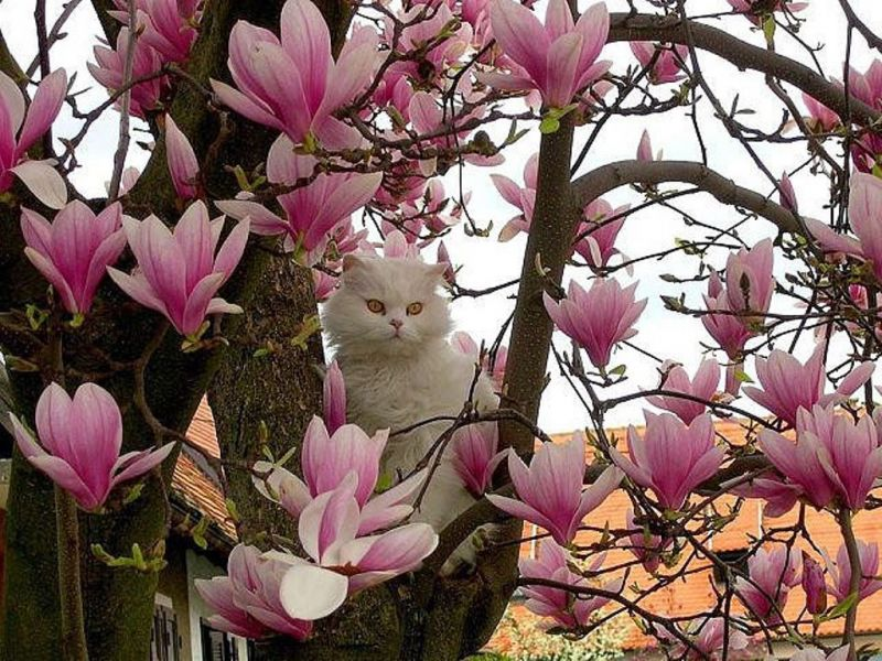 Для вдохновения Kot_i_magnoliya