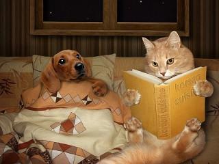 Собирать пазл Кот и пес онлайн