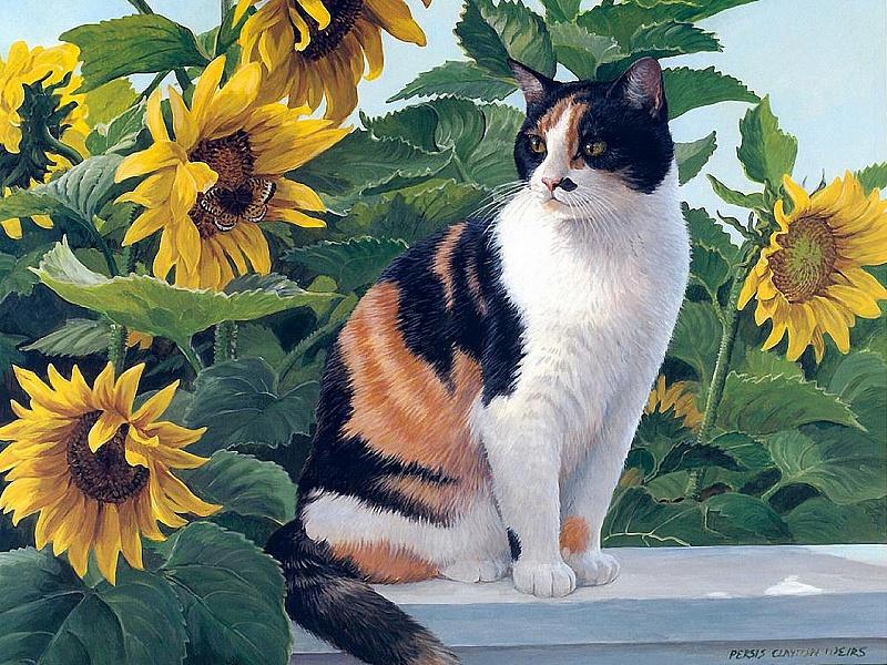 Пазл Собирать пазлы онлайн - Кошка и подсолнухи