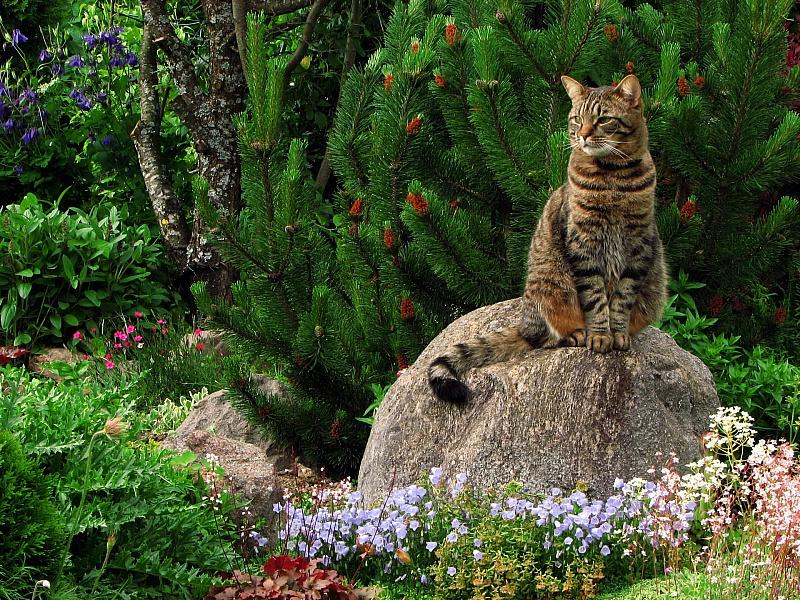 Пазл Собирать пазлы онлайн - Кот на камне