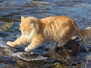 Собирать пазл Кот на реке онлайн