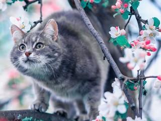 Собирать пазл Кот на яблоне онлайн