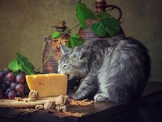 Собирать пазл Кот сыроед онлайн