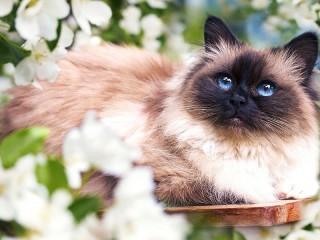 Собирать пазл Кот среди цветов онлайн