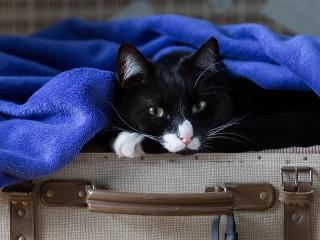 Собирать пазл Кот в чемодане онлайн