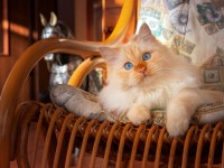 Собирать пазл Кот в кресле онлайн