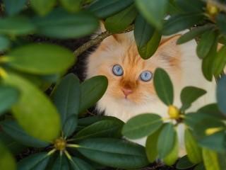 Собирать пазл Кот в кустах онлайн