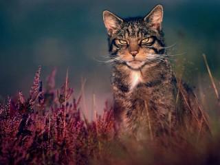 Собирать пазл Кот в траве онлайн