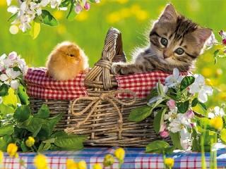 Собирать пазл Котенок и цыпленок онлайн