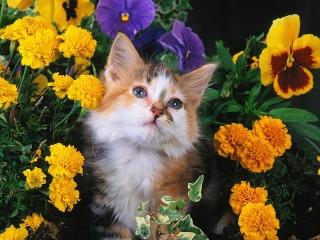 Собирать пазл Котенок в цветах онлайн