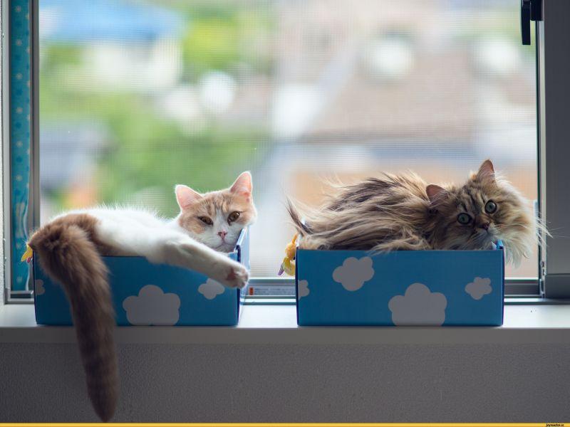 Пазл Собирать пазлы онлайн - Кошки