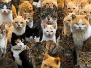 Собирать пазл Кошки и коты онлайн