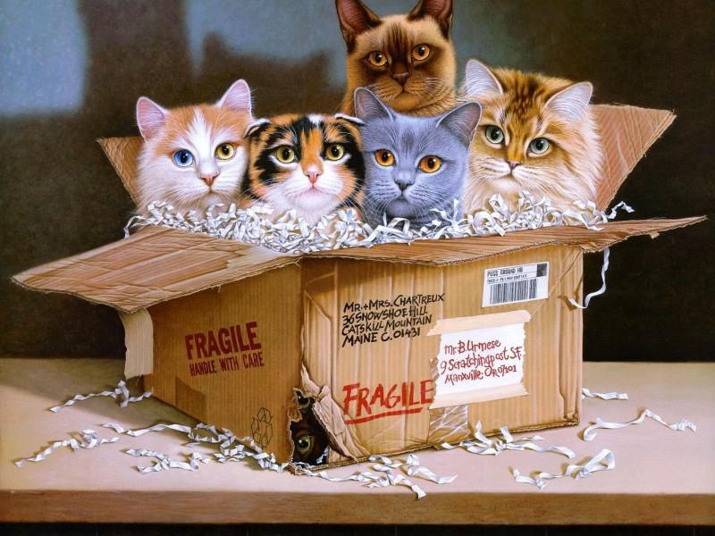 Пазл Собирать пазлы онлайн - Коты в коробке