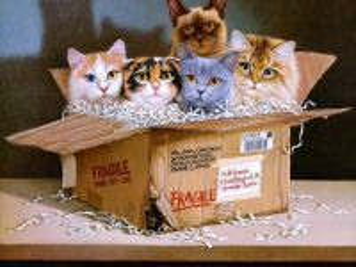 Собирать пазл Коты в коробке  онлайн