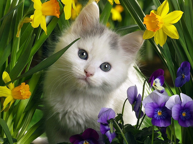 Пазл Собирать пазлы онлайн - Котик